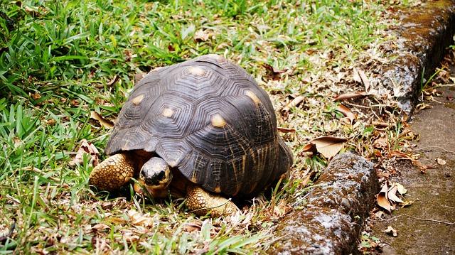 turtle-422179_640