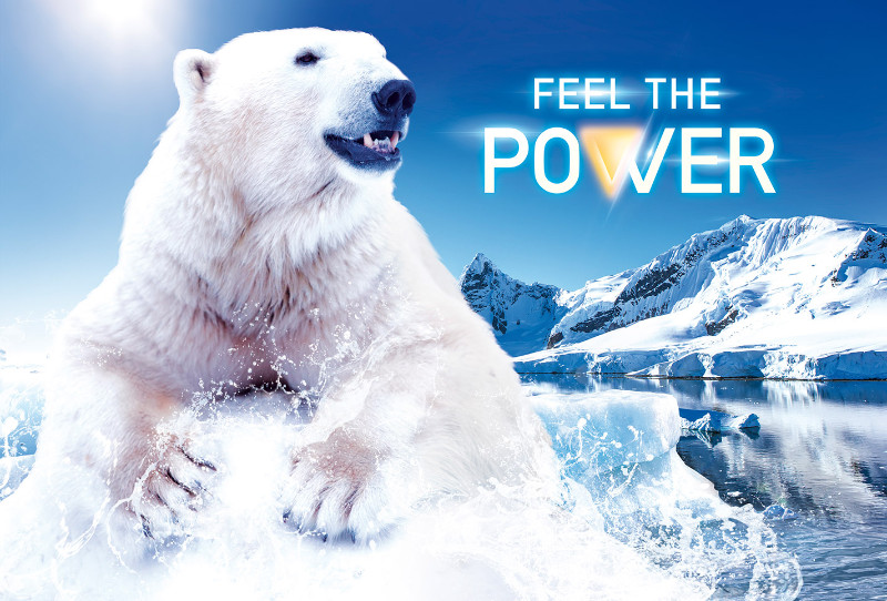 background-polar-bear